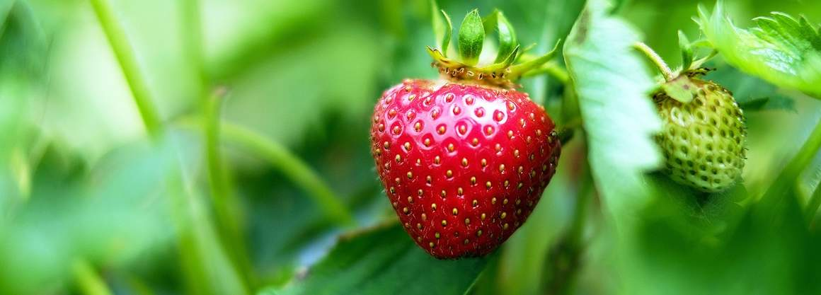 There are so many great reasons to eat strawberries